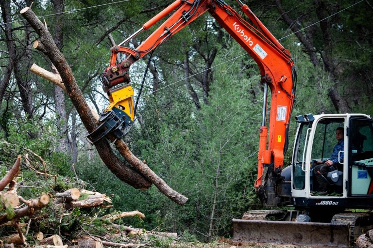 SPLIT: Na Marjanu posječeno 38 tisuća stabala